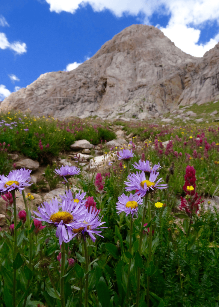 purple-asters-and-indian-paintbrush-below-the-worksite