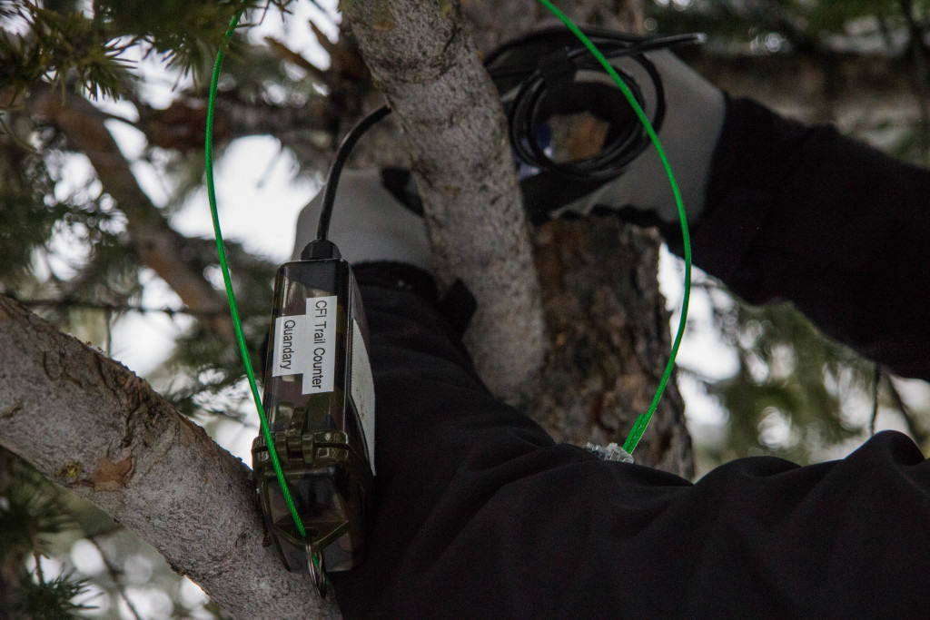 Tree Install - Close Up