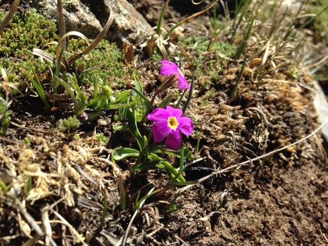 Wildflower (margaret)